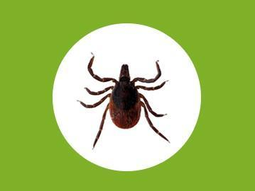 Images from Local Pest Control Newcastle